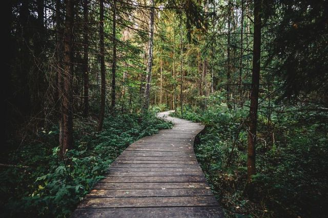forest-2619496__480.jpg
