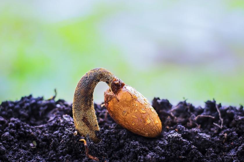 dejar de fumar semilla