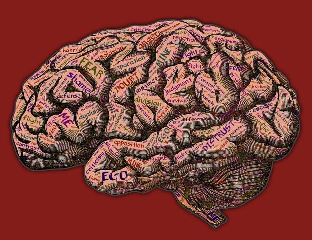 dejar de fumar cerebro.jpg