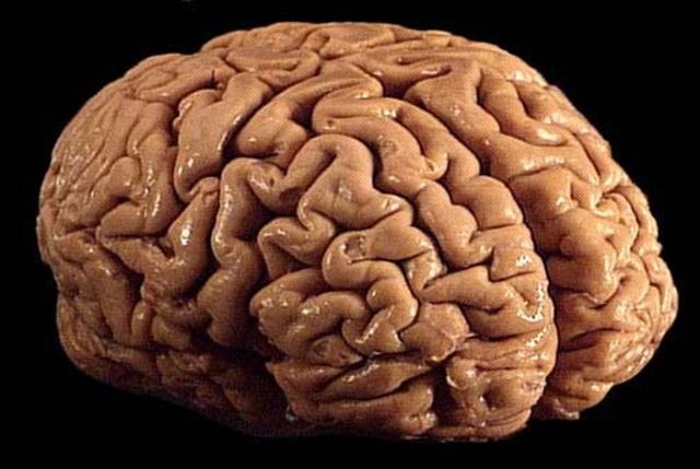 dejar de fumar cerebro mono adicción