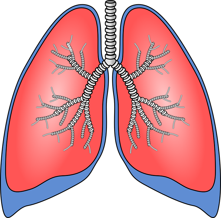 lungs-154282_960_720 (1).png